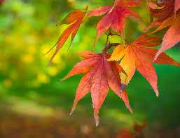شاخ و برگ زرد پاییزی