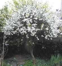 http://t1.gstatic.com/images?q=tbn:rkTdI4Yl4cIVgM:http://www.petitpepinieriste.fr/arbreenC/citronniersauvage/citronnier-sauvage-1.jpg
