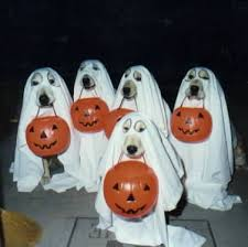 Halloween Trick or Treat Times