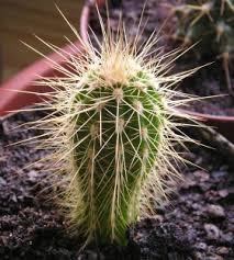 Kujdes___ - Faqe 5 Blume_Kaktus
