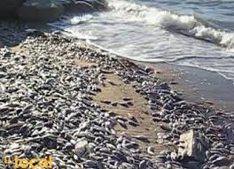 Mass fish death