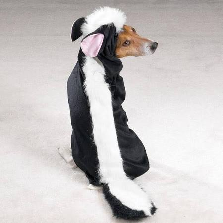 Little Stinker Skunk Dog Costume- Free