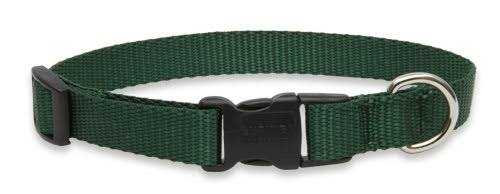 LupinePet 3/4 Inch Adjustable Dog Collar for Small to Large Dogs - Green