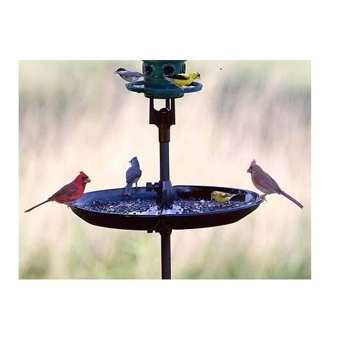 Brome Bird Care Seed Buster Seed Tray and Catcher