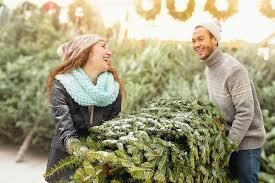 Pea Ridge Christmas Tree Farm by Long Island Christmas Tree Farms