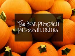 White Oak Pumpkin Patch by The Best Pumpkin Patches In Dallas Fort Worth Dallas Socials