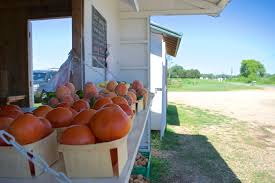 Best Pumpkin Patch Richmond Va by Snead U0027s Farm A Sustainable Family Farm Near Fredericksburg Va