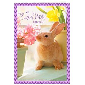 Bunny and Flowers Easter Cards, Pack of 10