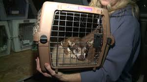 Colorado animal rescue saves discarded dogs ...