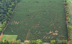 Best Pumpkin Patch Richmond Va by Autumn Fun At Liberty Mills Farm Site Of State U0027s Largest Corn