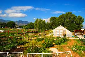 Free Pumpkin Patches In Colorado Springs by Guidestone Colorado We Grow Farmers Home