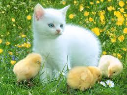 صور حيوانات images?q=tbn:ANd9GcQ