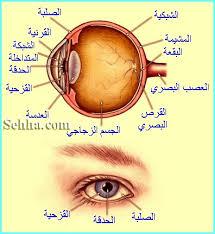 علاقة الغذاء بصحة العين