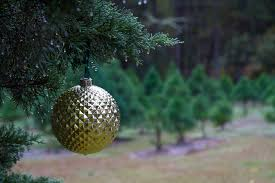 Christmas Tree Has Aphids by Tree Newsletters
