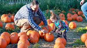 Milford Pumpkin Fest Schedule by Best Pumpkin Picking Patches In Ny Nj Connecticut Cbs New York