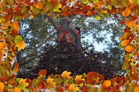 Pumpkin Patch Petting Zoo Dfw by Wizard Of Oz Dallas Arboretum