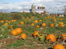 Pumpkin Fest Highwood by Halloween In Chicago Fun For Everyone The Clare
