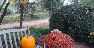 White Oak Pumpkin Patch by Corn Mazes And Pumpkin Patches Virginia Is For Lovers