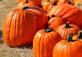 Circleville Pumpkin Festival Parade by 120 Events Celebrating Fall And Halloween In Columbus