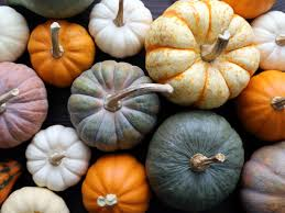 Steps To Carve A Pumpkin Worksheet by Observing The Life Cycle Of Pumpkins Scholastic