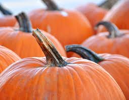 Pumpkin Patch Pueblo County by Colorado Pumpkin Festivals Think Colorado
