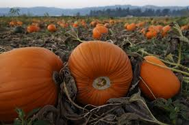 Boos Pumpkin Patch Nebraska City by Halloween And Harvest Themed Events Happening In Clackamas County