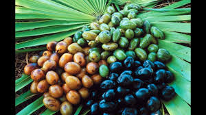 Pumpkin Seed Oil Prostate Side Effects by Saw Palmetto May Help With Benign Prostatic Hyperplasia Bph