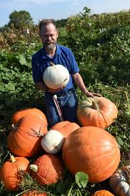 Pas Pumpkin Patch 2017 by Andy Stender U0027sees U0027 The Beauty In His Pumpkin Patch Even Without