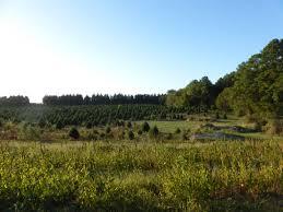 Pea Ridge Christmas Tree Farm by The Top 10 Things To Do Near Historic Odessa Foundation Tripadvisor