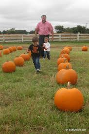 Pumpkin Patch Petting Zoo Dfw by Flower Mound Pumpkin Patch Spot To Visit With Tots U2013 Four To Adore
