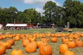 Free Pumpkin Patch Houston Tx by Texas State Railroad U0027s U0027pumpkin Patch U0027 Newswire