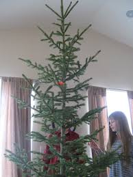 Christmas Tree Has Aphids by Almost Unschoolers Christmas Science For Kids Identifying The Tree