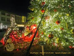 Kinds Of Christmas Trees by Not Afraid Of Color December 2014