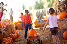 Best Pumpkin Patch Richmond Va by Get Ready For Virginia U0027s Fall Festivals On Liberty