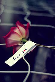 وتفتحت أزهار الوجع images?q=tbn:ANd9GcR