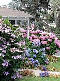 Flowers For Flower Beds by Flowering Shrubs For Shade Gardens Hgtv