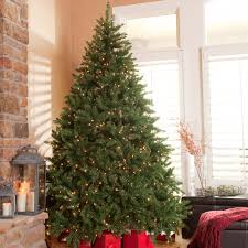 7ft Black Pencil Christmas Tree by Classic Pine Full Pre Lit Christmas Tree Hayneedle