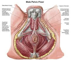 Pelvic Floor Spasms After Childbirth by The Vital Information Our Bowels N2 Physical Therapy