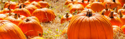 Cal Poly Pomona Annual Pumpkin Patch by Fall For Pumpkin Patches U0026 Festivals Westcoast Media