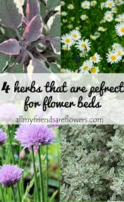 Flowers For Flower Beds by Herbs To Plant In Flower Beds