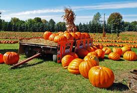 Free Pumpkin Patch Houston Tx by Things To Do In Houston This Weekend Sep 29th Oct 1st 2017