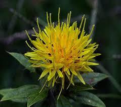 زهور النجمية تعتبر من الأزهار المعمرة Images?q=tbn:ANd9GcSDTx2rd3jfScLzAm2ojCiedc6oWGA1MJs27iXL8UxxcLhHy301