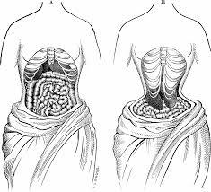 corset wearer u0027s organs illuminated by mri u2013 lucy u0027s corsetry