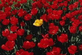 .. كعذوبة .. الورد الأحمر .. مرحبا ً بكم يانبض