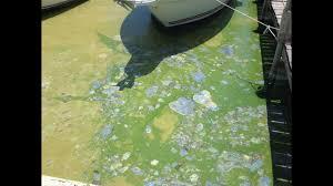 Bathtub Beach Stuart Fl Closed by Fed Up Residents Speak Out At Martin County Algae Meeting Wptv Com