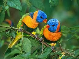 الطيور images?q=tbn:ANd9GcS