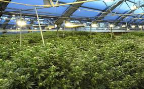 Pumpkin Patch Pueblo County by Abandoned Pepsi Factory Turned Into Massive Grow Op High Times
