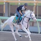 札幌2歳ステークス, 新馬, 競走馬の血統