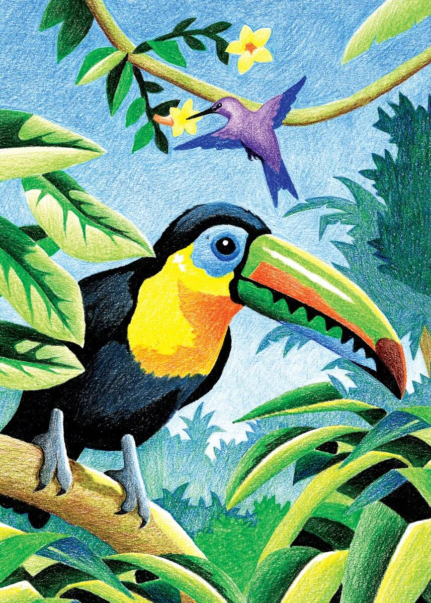 Royal Colour Pencil by Numbers Mini - Tropical Birds