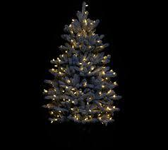 Bethlehem Lights Christmas Trees Qvc by Santa U0027s Best 5 U0027 Rgb 2 0 Flocked Balsam Fir Christmas Tree U2014 Qvc Com